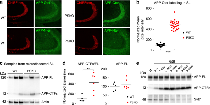 Presenilin-mediated cleavage of APP regulates synaptotagmin-7 and
