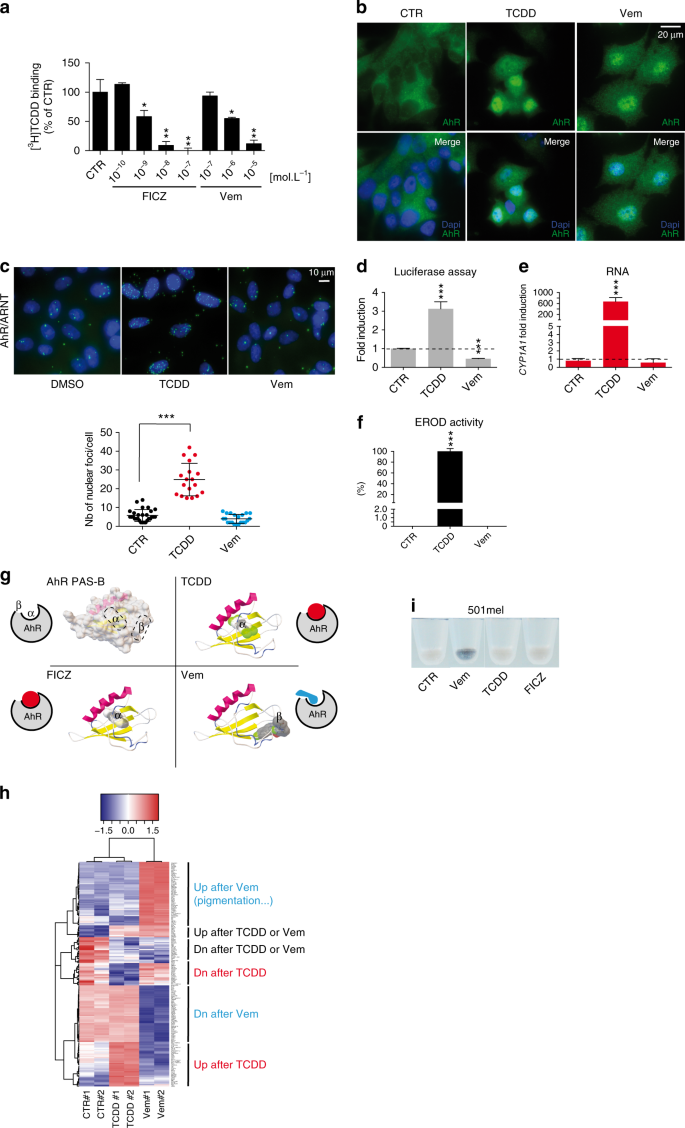 Sustained activation of the Aryl hydrocarbon Receptor transcription