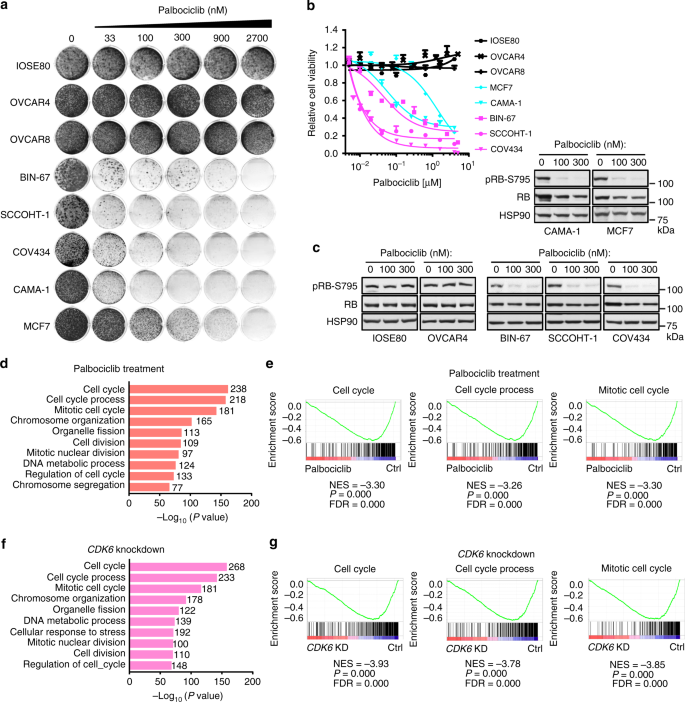 Cdk4 6 Inhibitors Target Smarca4 Determined Cyclin D1 Deficiency In Hypercalcemic Small Cell Carcinoma Of The Ovary Nature Communications