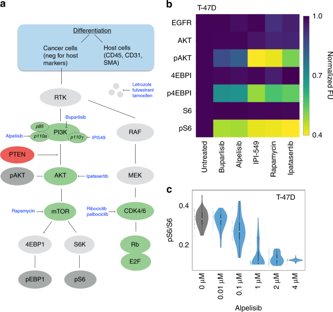 Single-cell barcode analysis provides a rapid readout of