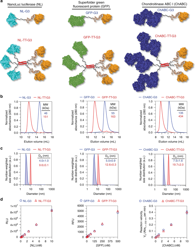 Locally anchoring enzymes to tissues via extracellular glycan