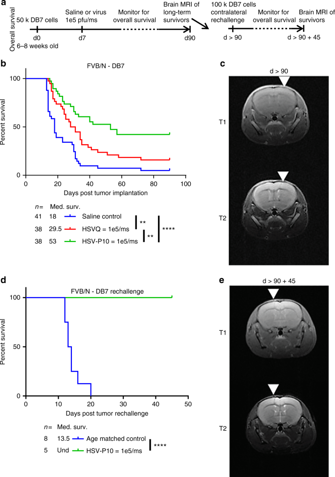 PTEN expression by an oncolytic herpesvirus directs T-cell