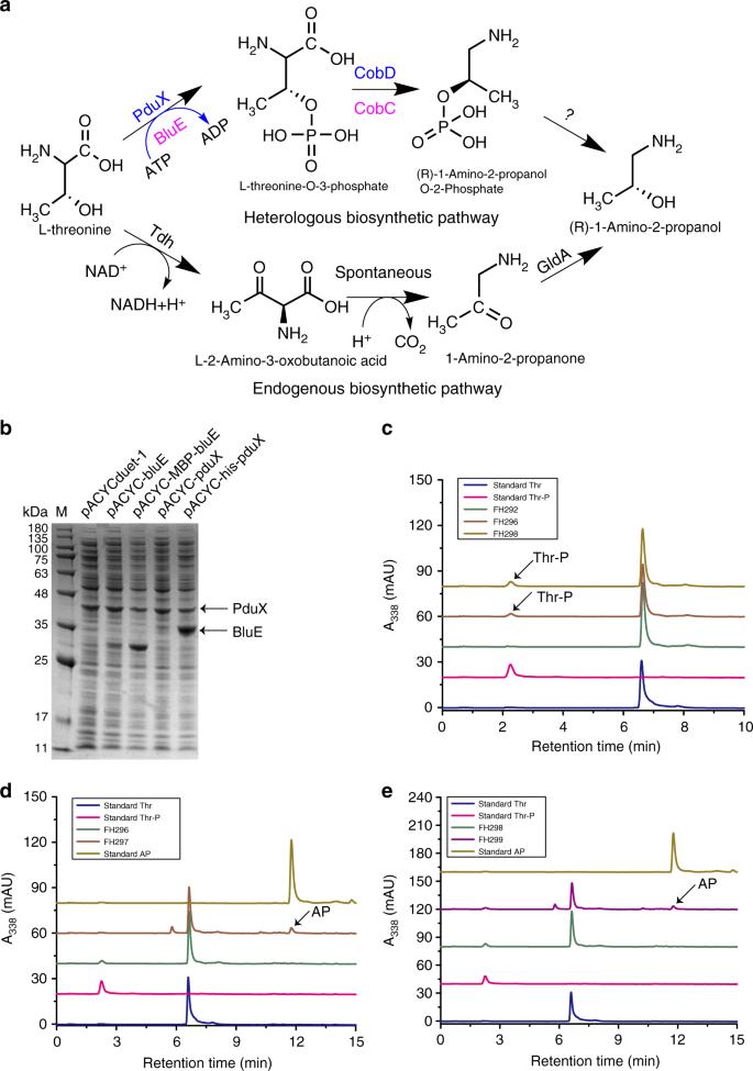 Metabolic engineering of Escherichia coli for de novo biosynthesis