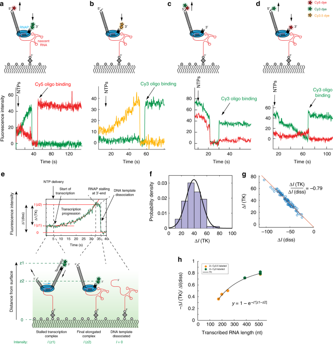 Real-time assembly of ribonucleoprotein complexes on nascent RNA