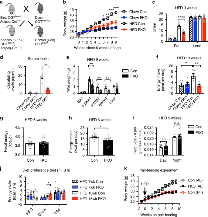 Adipocyte OGT governs diet-induced hyperphagia and obesity | Nature