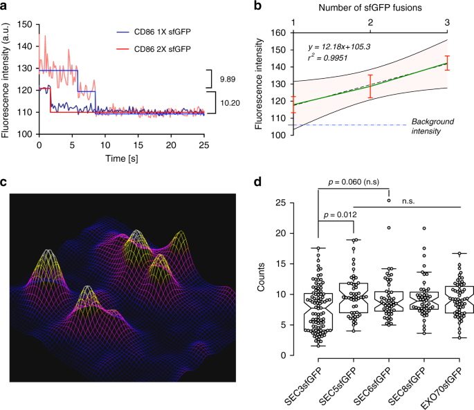 Exocyst dynamics during vesicle tethering and fusion | Nature