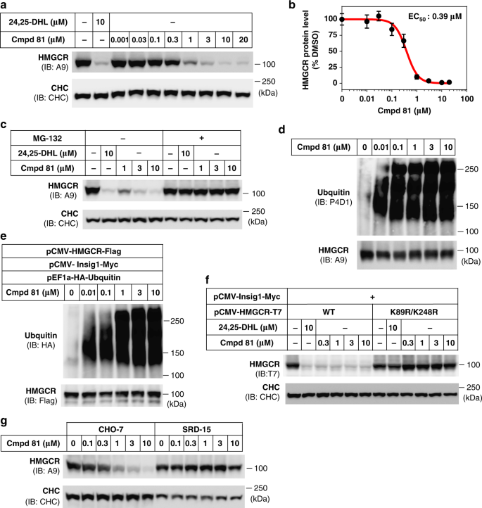 Discovery of a potent HMG-CoA reductase degrader that eliminates