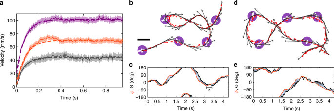 Inertial delay of self-propelled particles | Nature