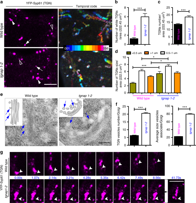 TGNap1 is required for microtubule-dependent homeostasis of