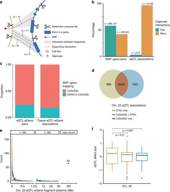 Chromatin interactions and expression quantitative trait loci reveal