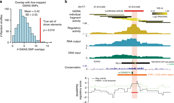 High-resolution genome-wide functional dissection of
