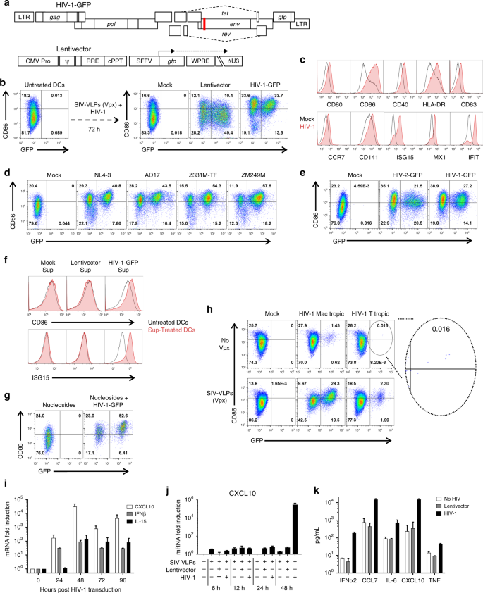 Intron-containing RNA from the HIV-1 provirus activates type