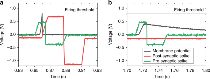 Spike-timing-dependent plasticity learning of coincidence