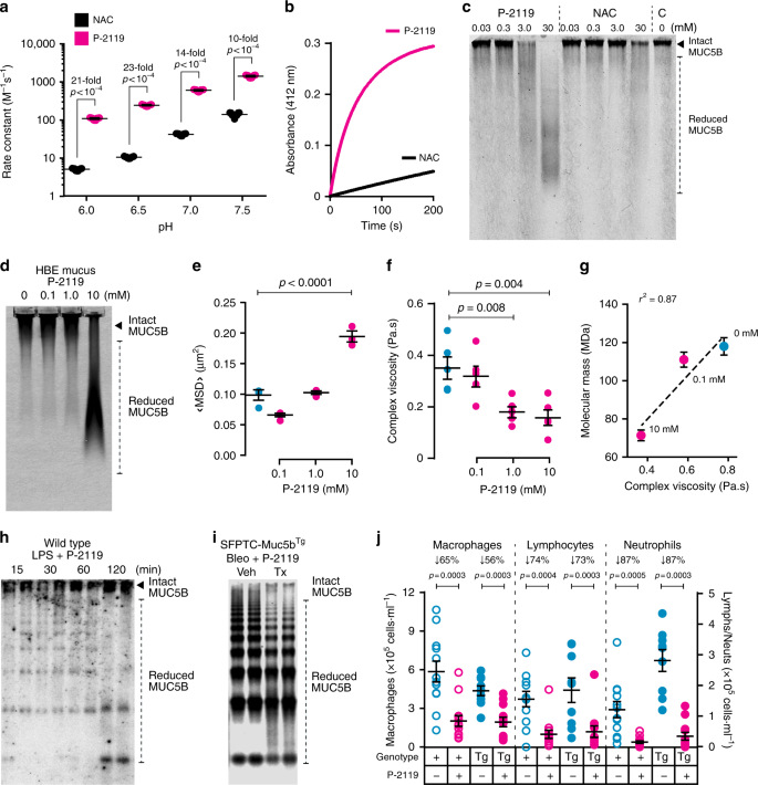 Muc5b overexpression causes mucociliary dysfunction and