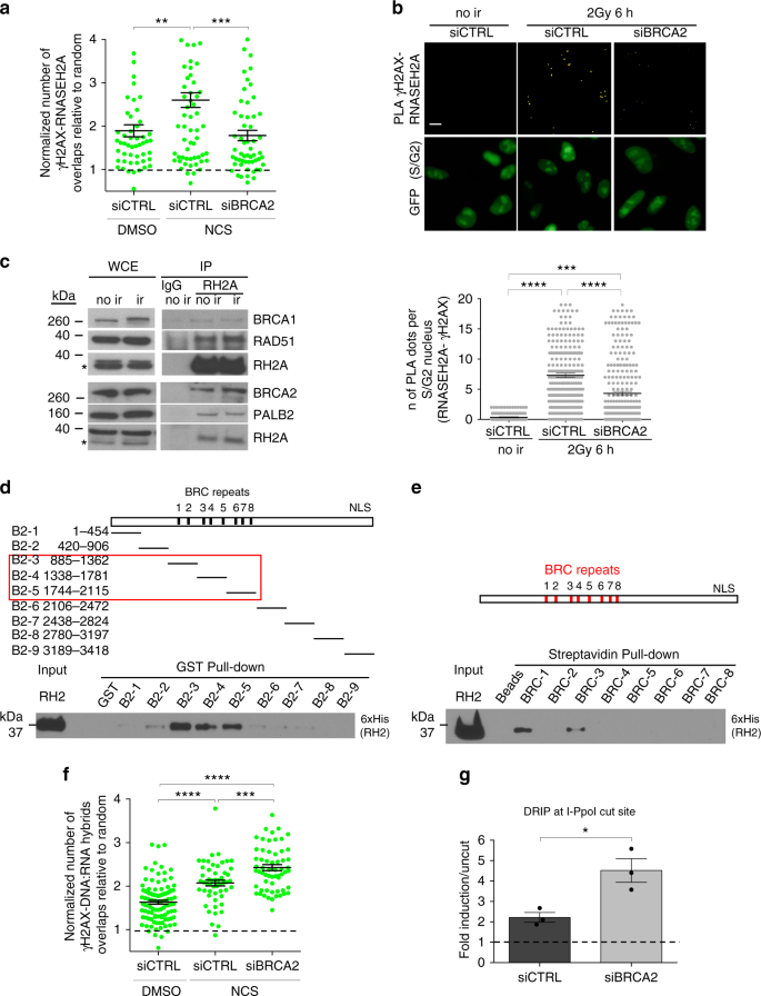 BRCA2 controls DNA:RNA hybrid level at DSBs by mediating RNase H2
