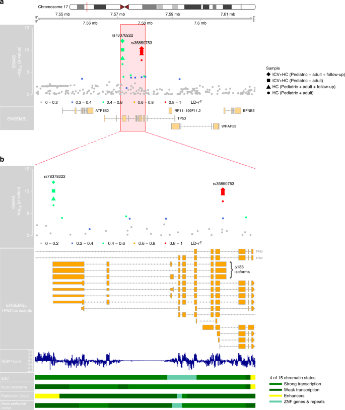 Low-frequency variation in TP53 has large effects on head