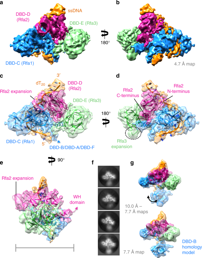 A structural and dynamic model for the assembly of