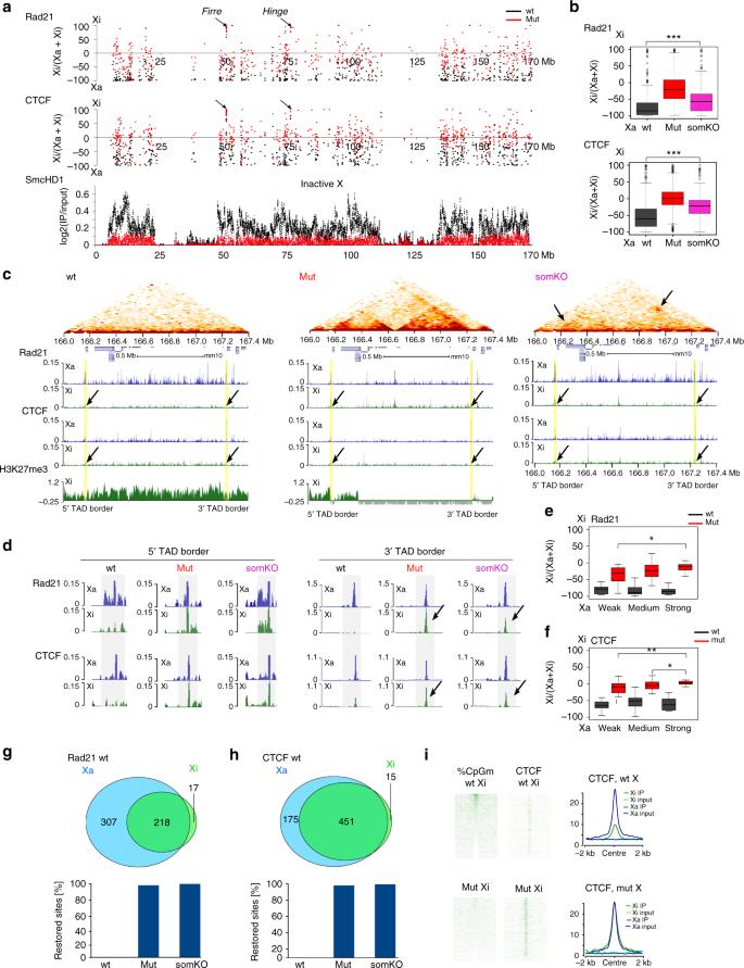 The non-canonical SMC protein SmcHD1 antagonises TAD