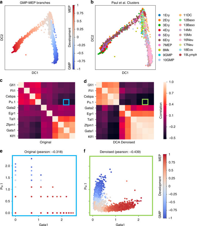Single-cell RNA-seq denoising using a deep count autoencoder