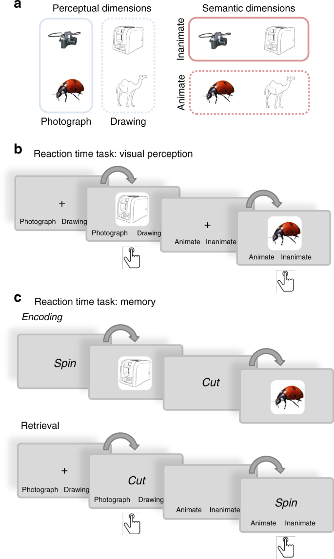Evidence that neural information flow is reversed between object