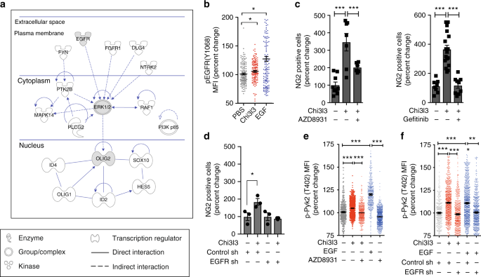 Chi3l3 induces oligodendrogenesis in an experimental model