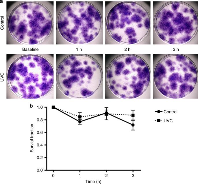 Inactivating hepatitis C virus in donor lungs using light