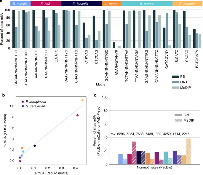 Single-molecule sequencing detection of N 6-methyladenine in