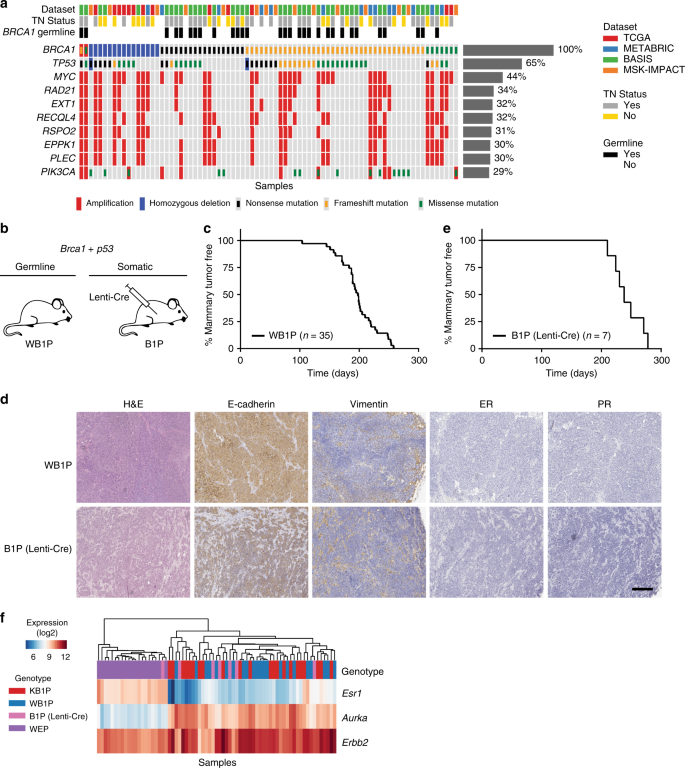 Comparative oncogenomics identifies combinations of driver