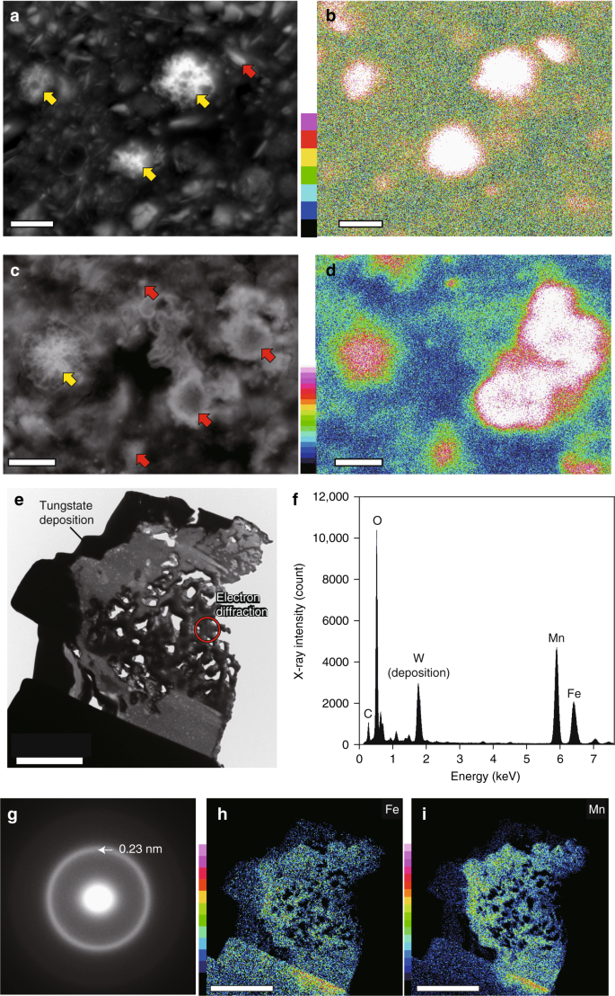 Significant contribution of subseafloor microparticles to