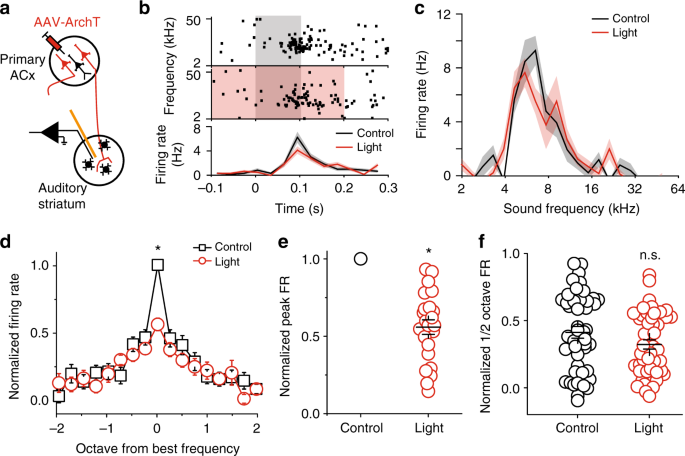 Medial geniculate body and primary auditory cortex