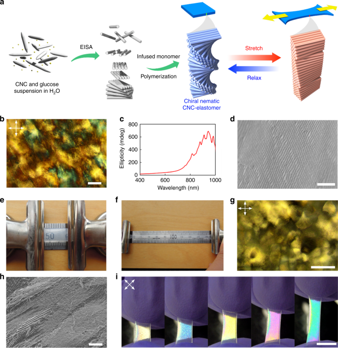 Unwinding a spiral of cellulose nanocrystals for stimuli-responsive stretchable optics
