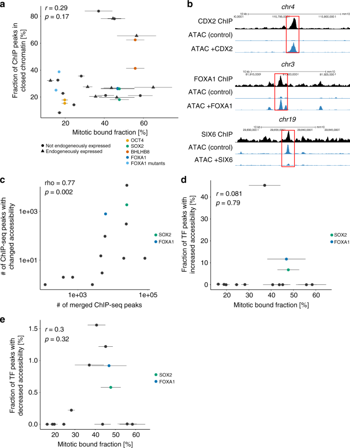 Mitotic chromosome binding predicts transcription factor