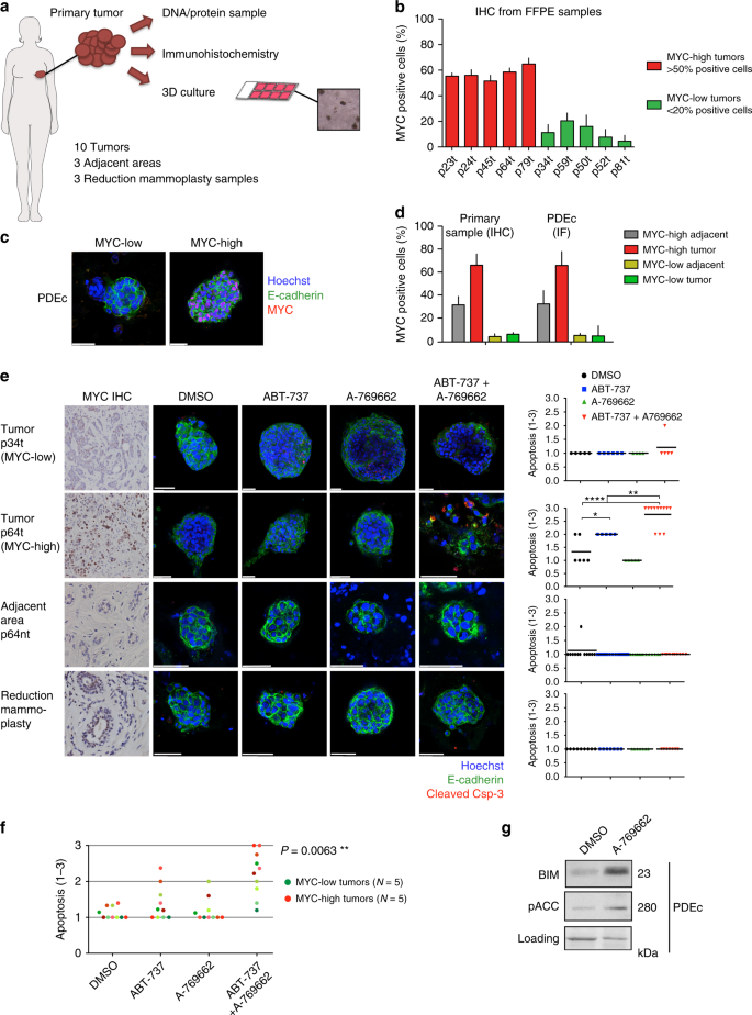 Pharmacological reactivation of MYC-dependent apoptosis induces