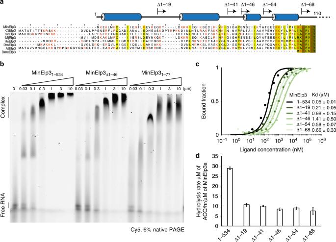 The Elongator subunit Elp3 is a non-canonical tRNA