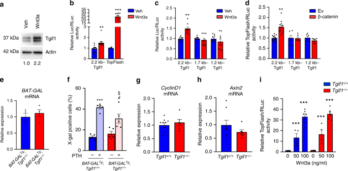 TG-interacting factor 1 (Tgif1)-deficiency attenuates bone