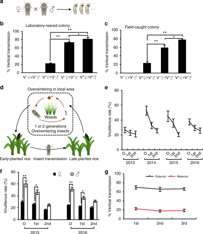 Viral Pathogens Hitchhike With Insect Sperm For Paternal Transmission Nature Communications