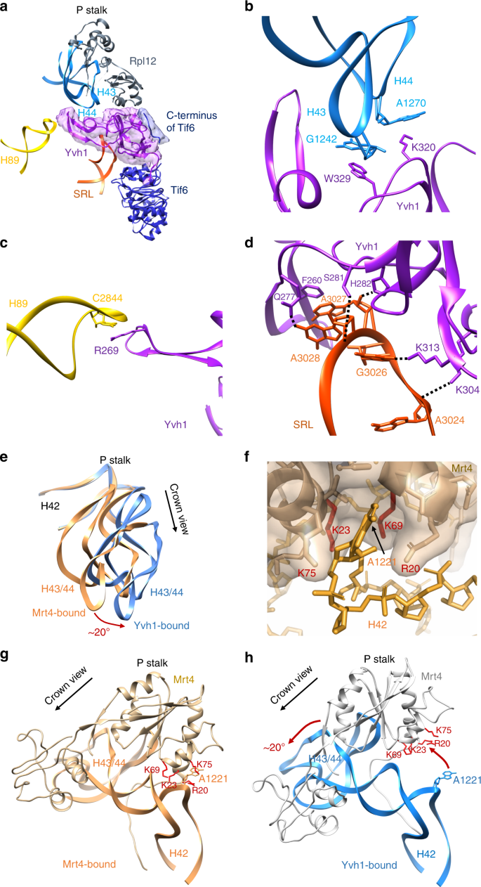Tightly-orchestrated rearrangements govern catalytic center