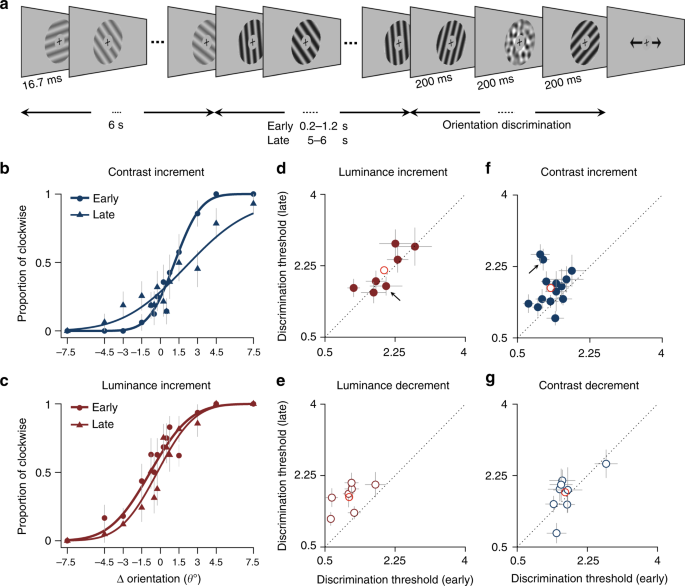 Contrast and luminance adaptation alter neuronal coding and