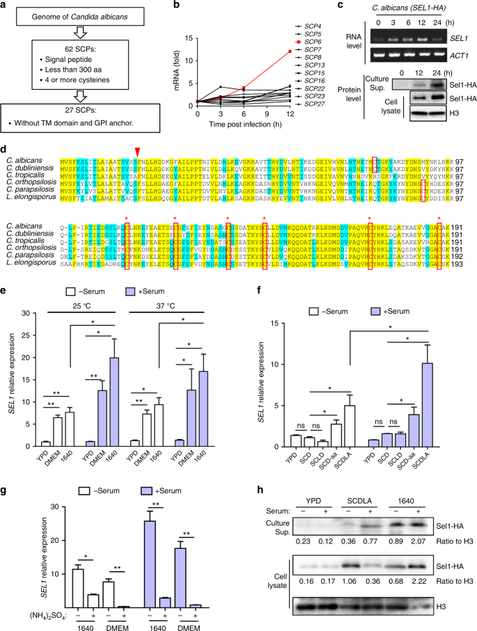 A small secreted protein triggers a TLR2/4-dependent
