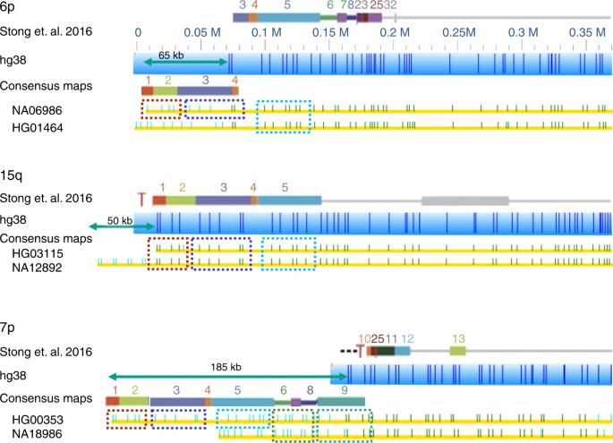 Genome maps across 26 human populations reveal population