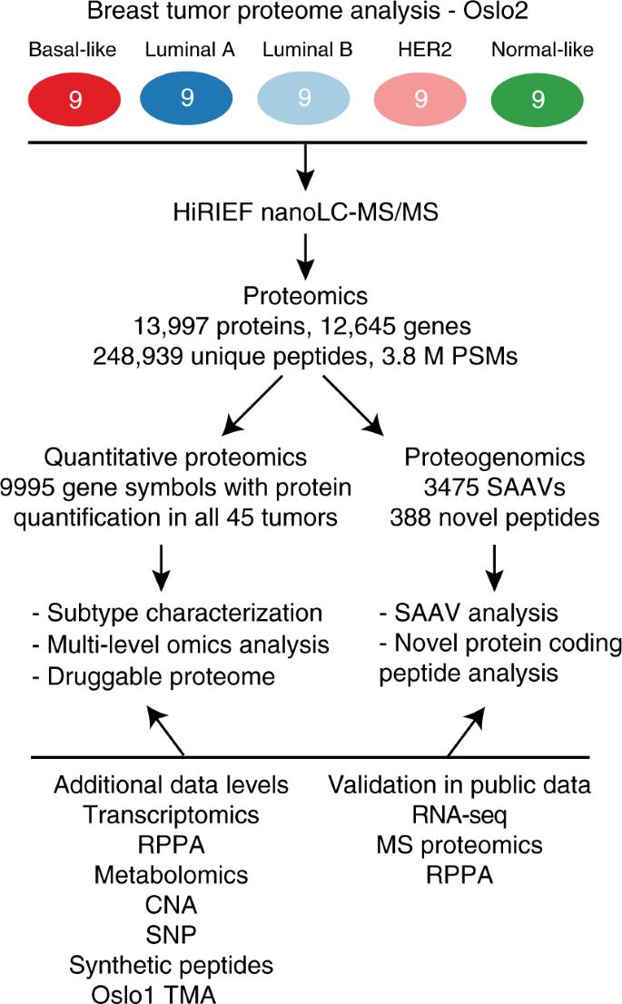 Breast cancer quantitative proteome and proteogenomic