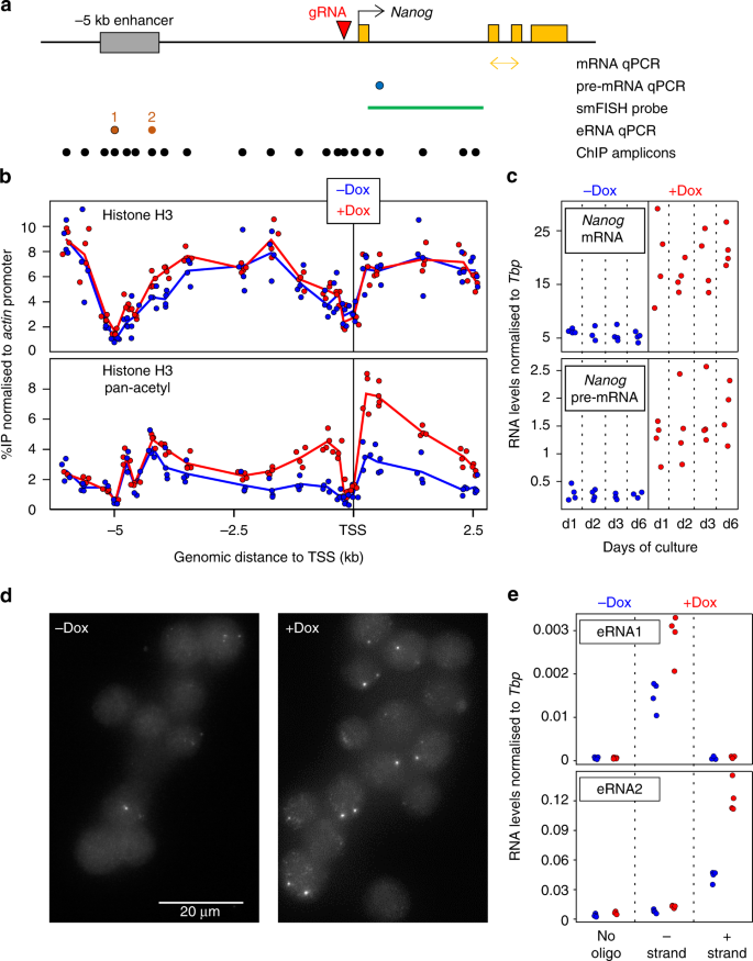 The molecular logic of Nanog-induced self-renewal in mouse embryonic