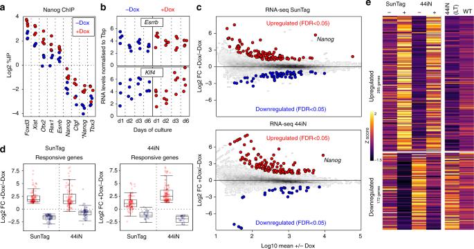 The molecular logic of Nanog-induced self-renewal in mouse