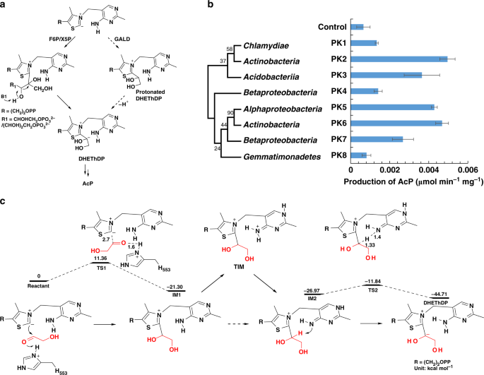 Constructing a synthetic pathway for acetyl-coenzyme A from one