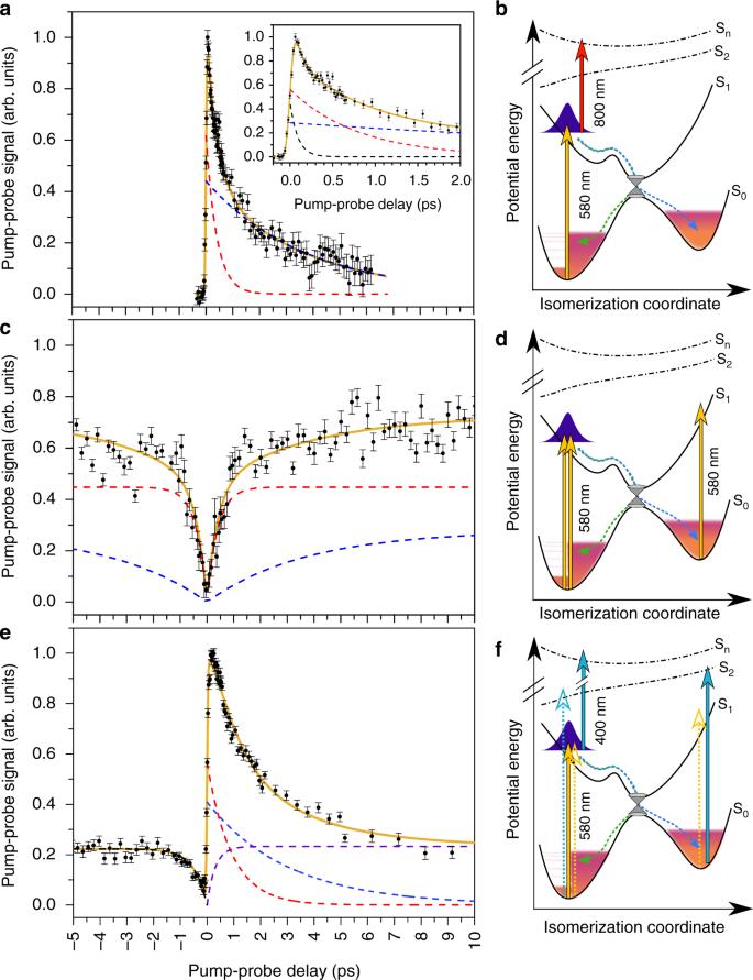 Intrinsic photoisomerization dynamics of protonated Schiff