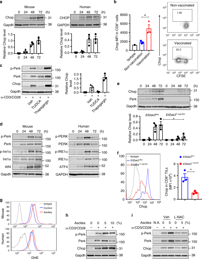 ER stress-induced mediator C/EBP homologous protein thwarts
