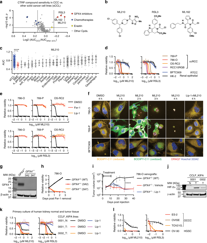 7cfc3369ca A GPX4-dependent cancer cell state underlies the clear-cell ...