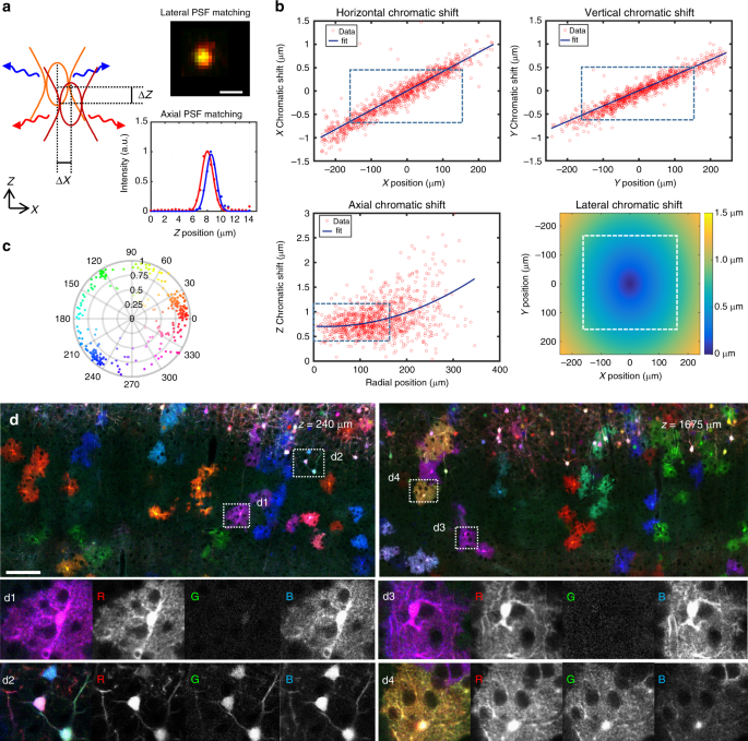 Multicolor multiscale brain imaging with chromatic
