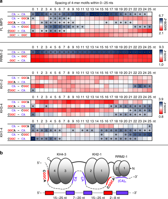 Recognition Of Cered Rna Elements