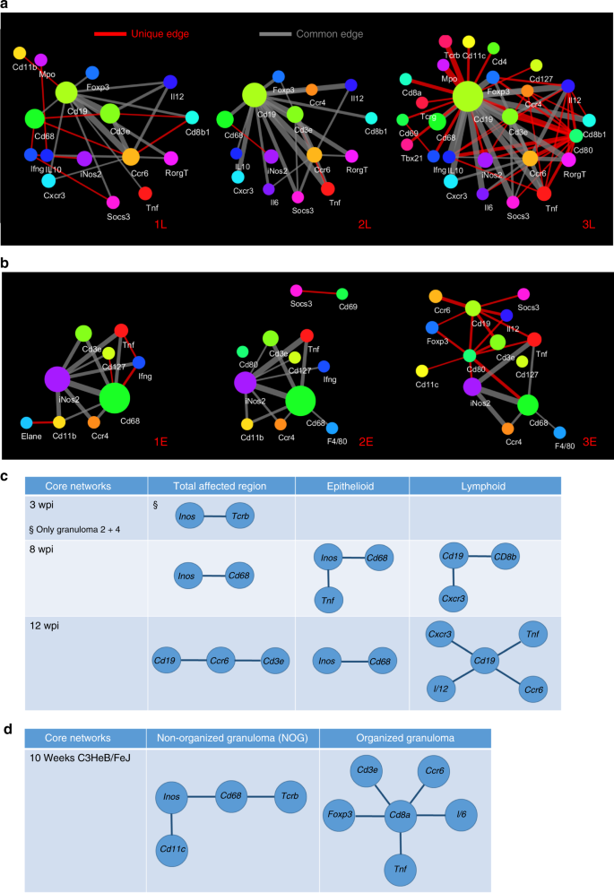 Spatial and temporal localization of immune transcripts
